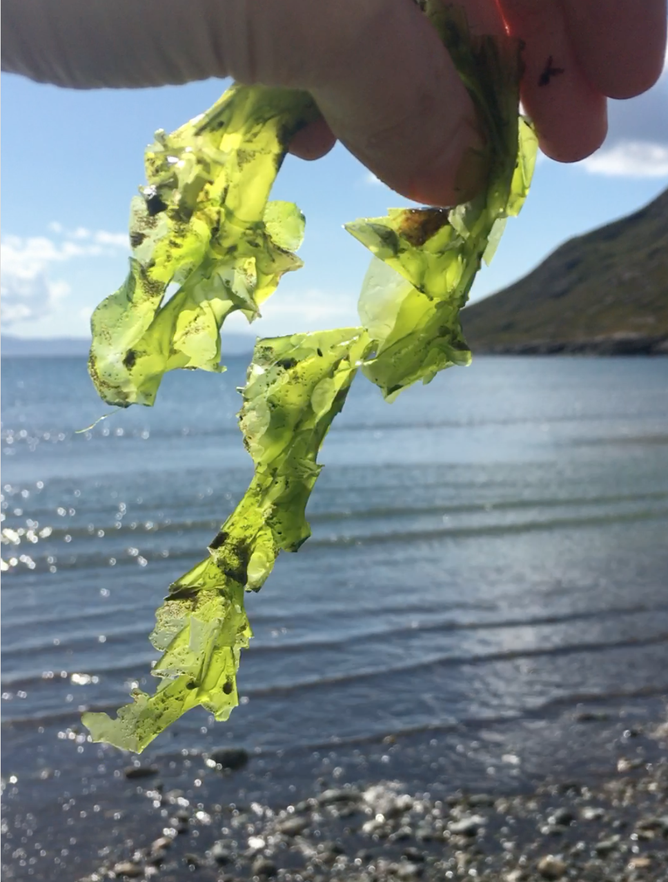 Seaweed Solutions From The Inside