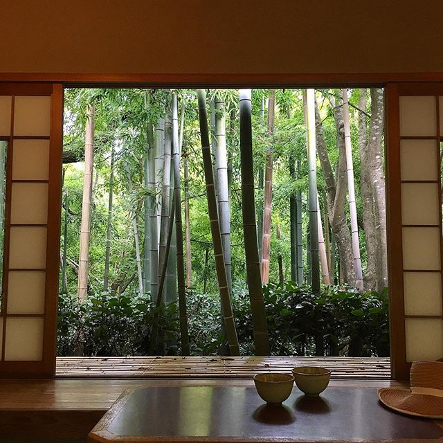 Leave it to a silent-film era actor to create a garden space like this. 💚 #okochisanso #okochidenjiro #matcha #greentea #kyoto #japan #silentfilm #bamboo #japanesegarden