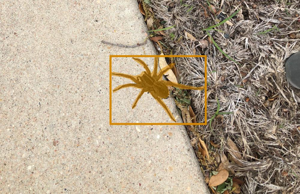 Same spider, same pixel mask, parallel universe.