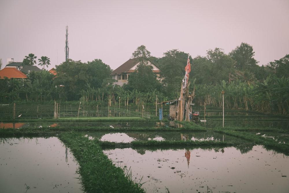 Bali (33).jpg