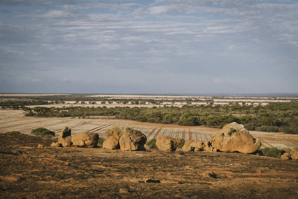 Angie Roe Photography Wheatbelt Rural Farm Landscape Seeding (19).jpg