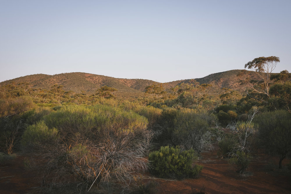 Helena Aurora Range Koolyanobbing (33).jpg