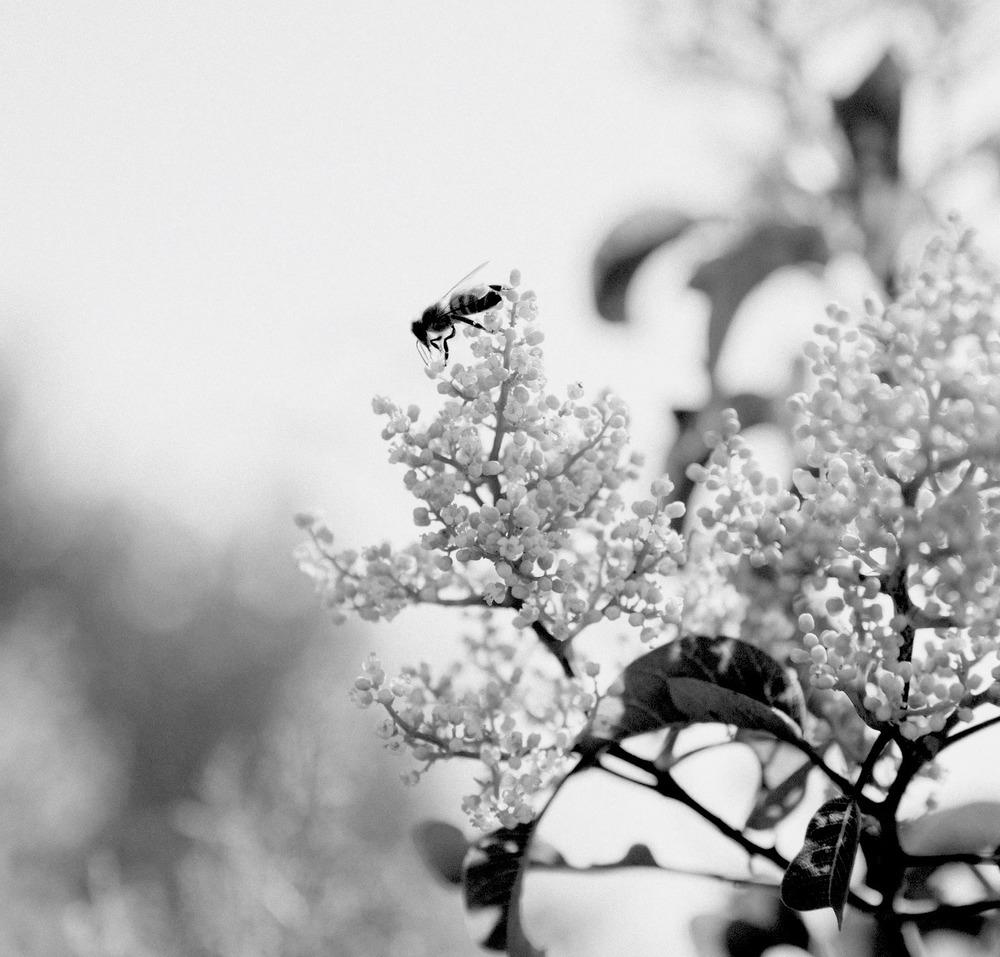 Anonymous Bee.jpg