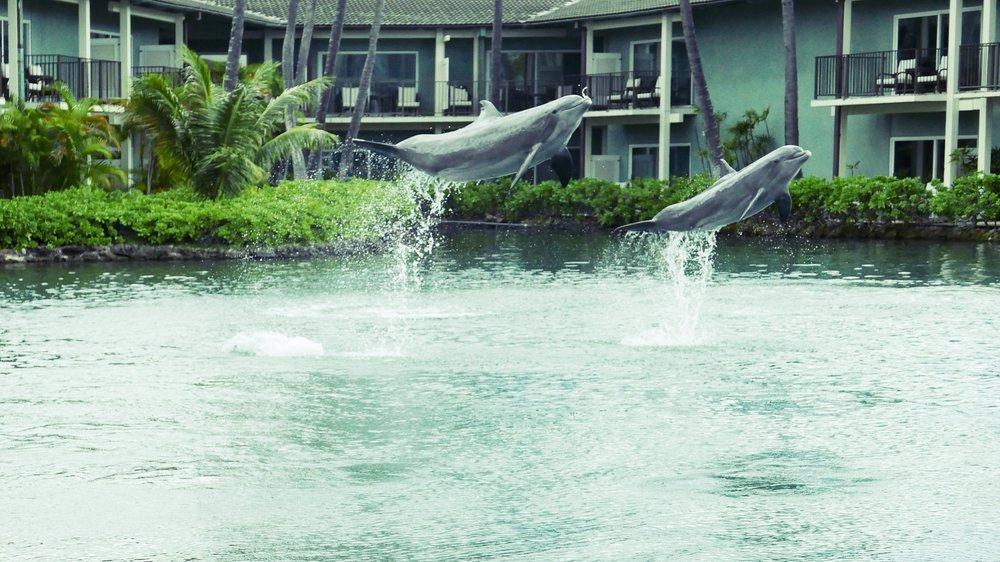 Dolphins at Kahala Hotel