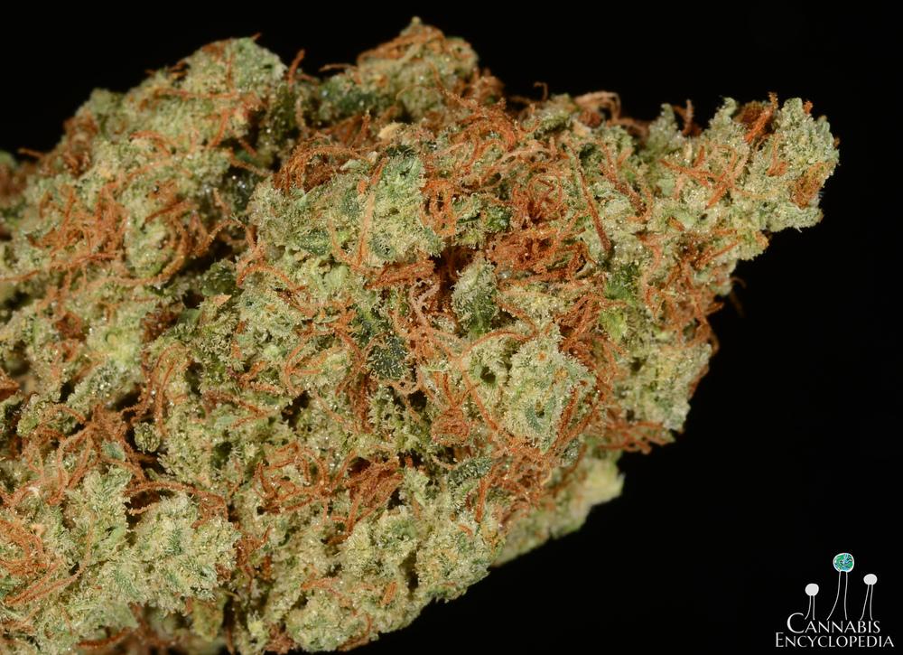 tangerine haze-5.jpg