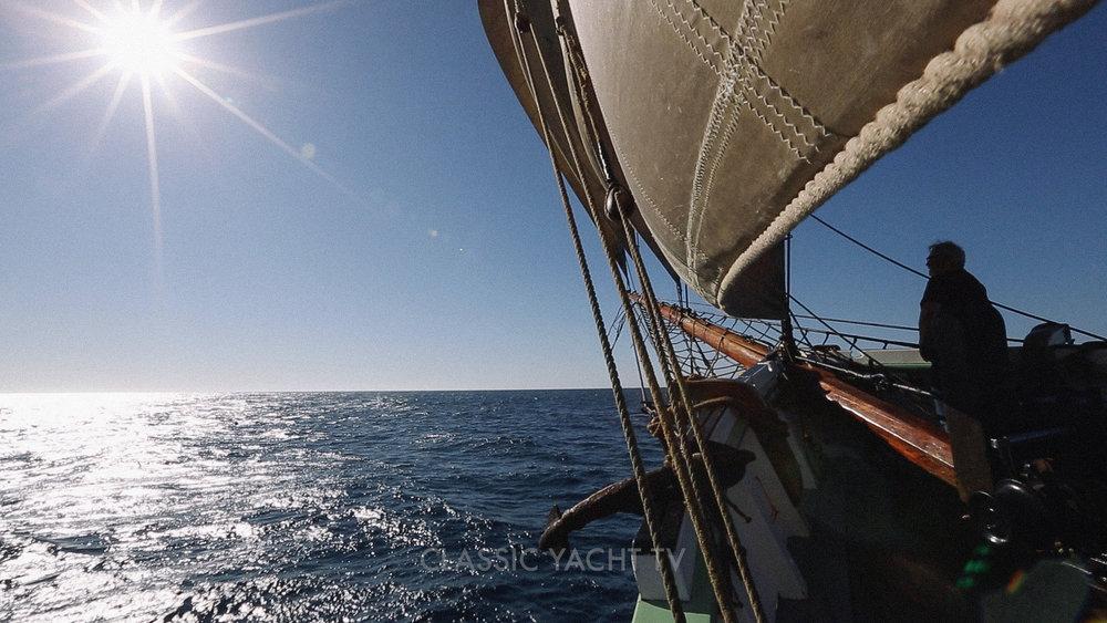Pilot Whales BE2_CYTV.jpg