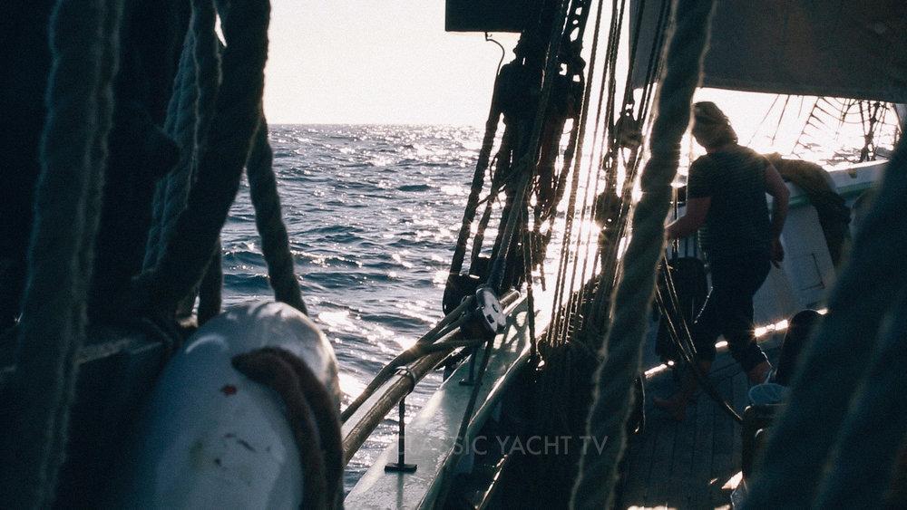 Pilot Whales BE1_CYTV.jpg