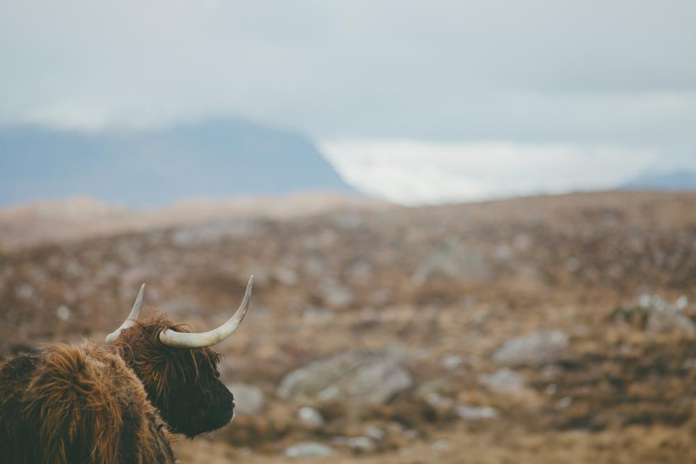 scotland (186 of 242).jpg