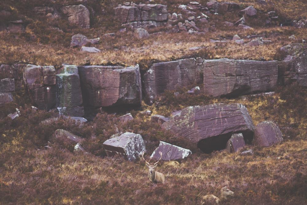 scotland (220 of 25).jpg
