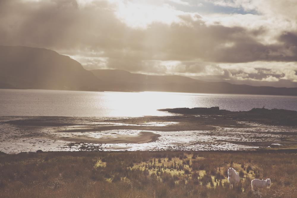 scotland (124 of 242).jpg