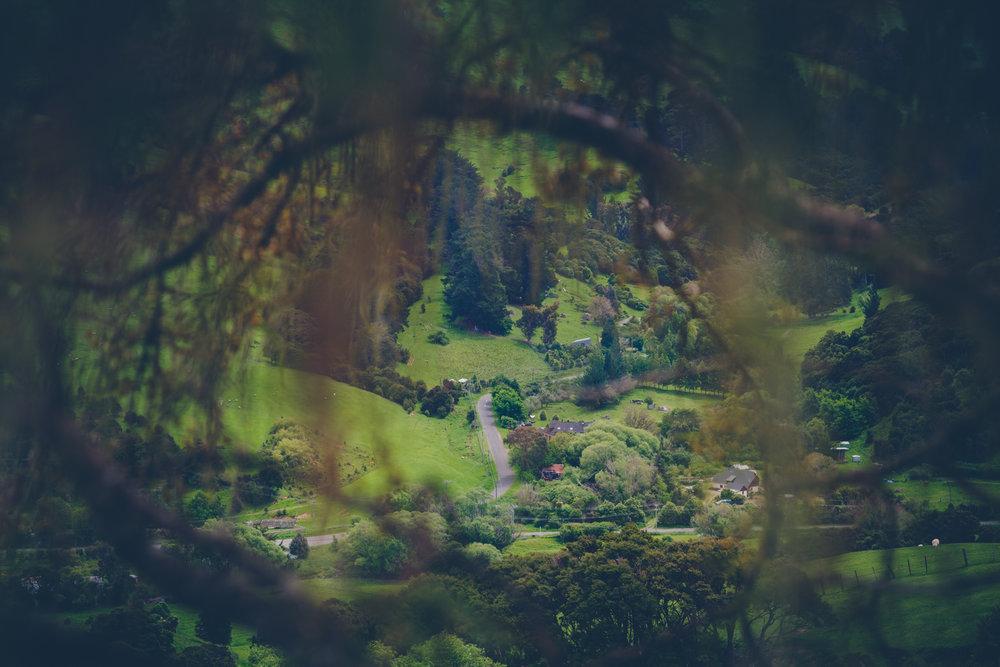 NZ_fb-2.jpg