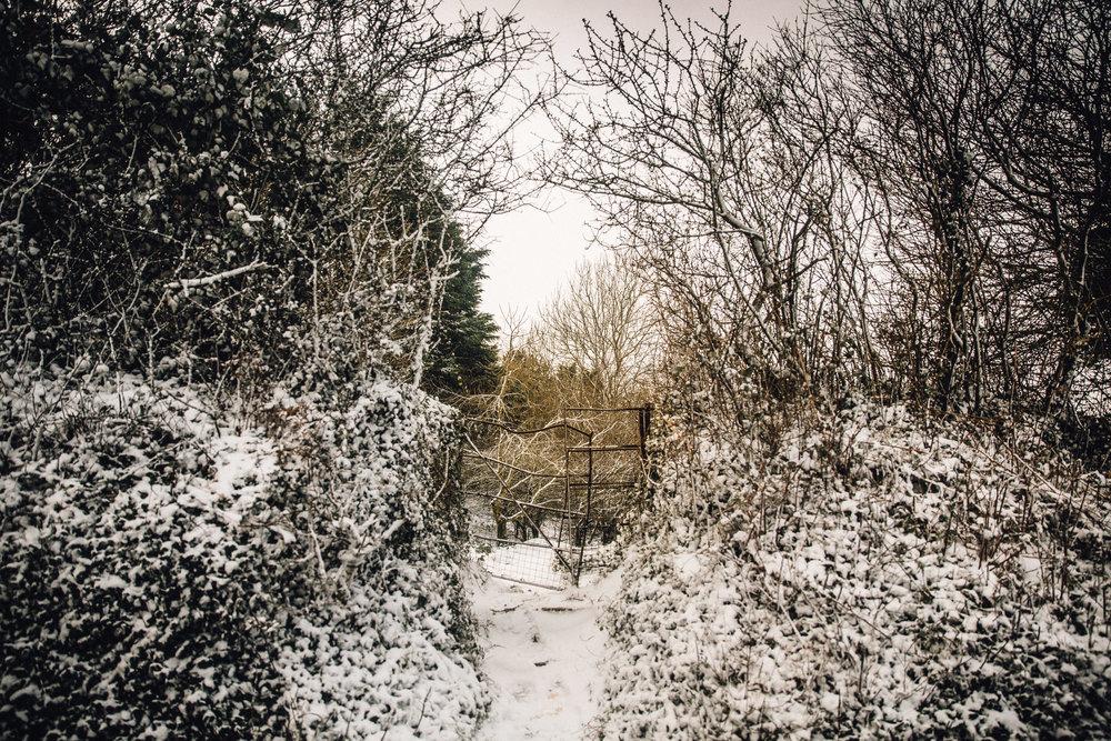 snow-20.jpg