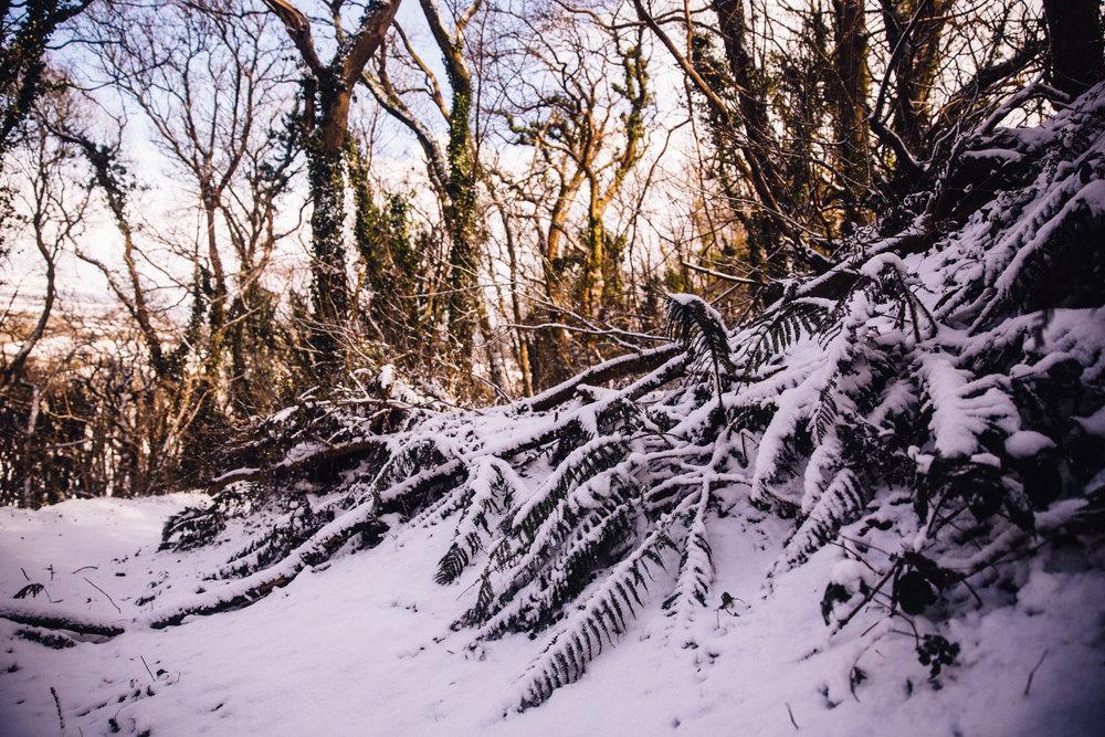 snow-24.jpg