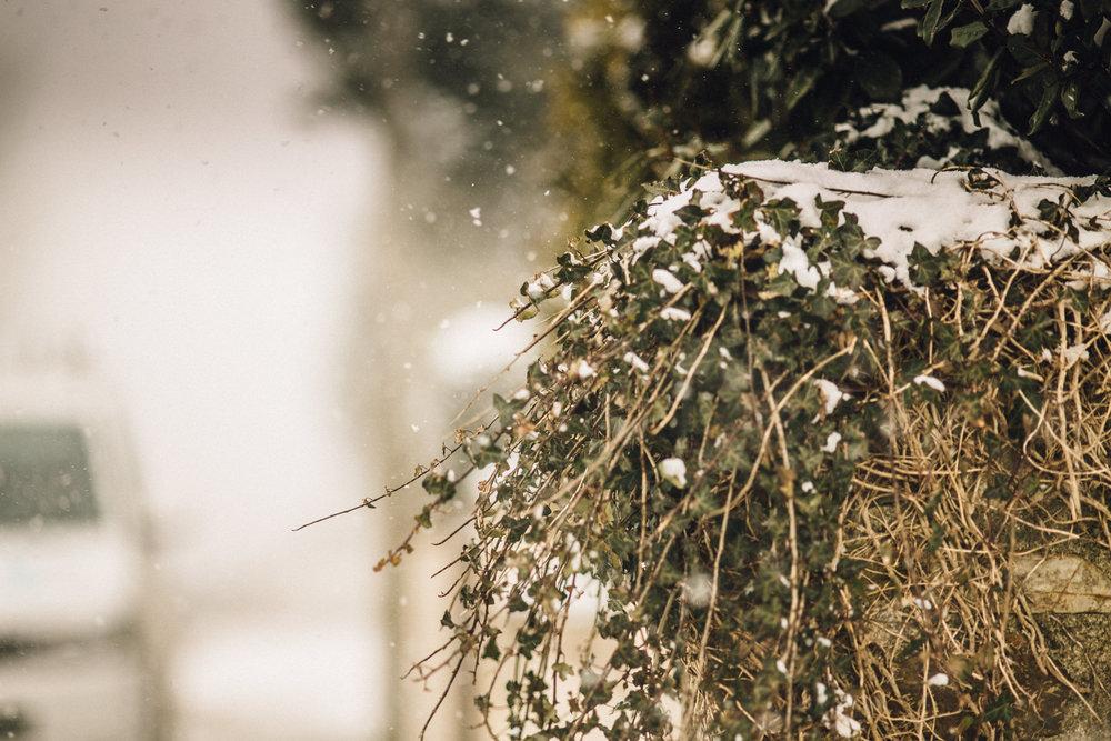 snow-42.jpg