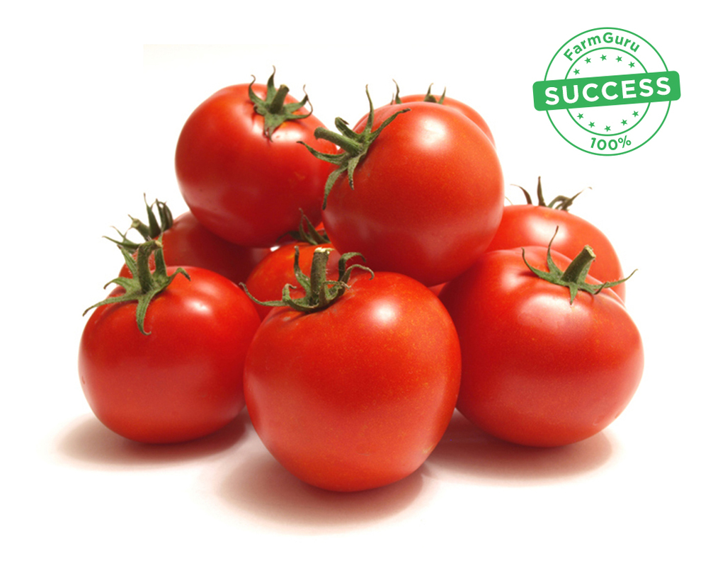टोमॅटो.jpg