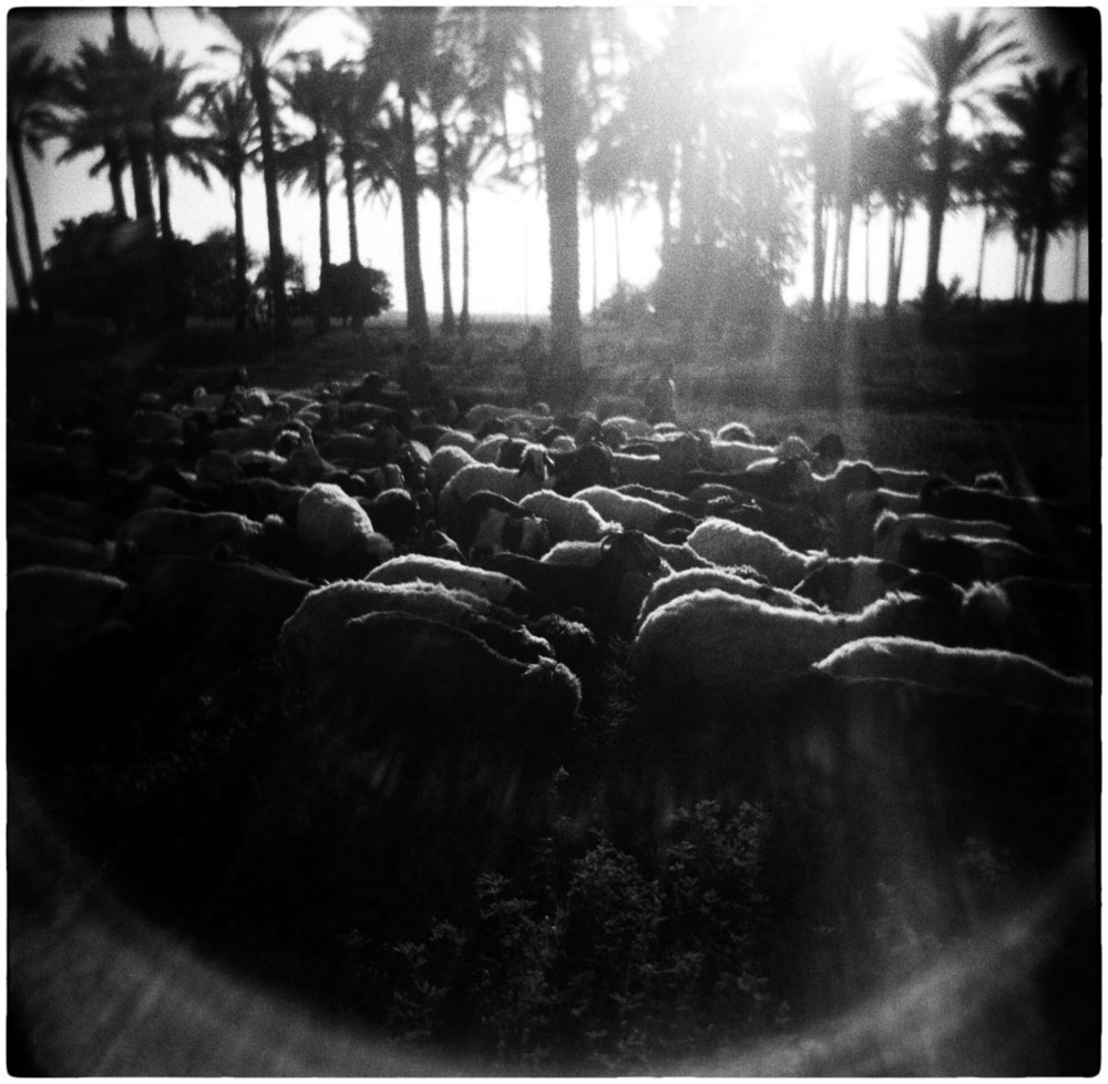 Iraq_Holga_sequenced010.jpg