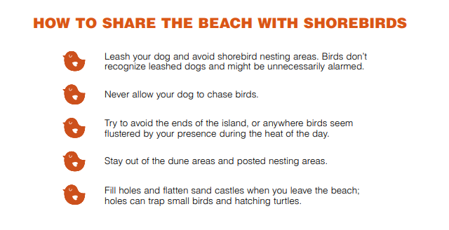 shorebirds5.PNG