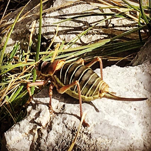 A real life Jiminy Cricket