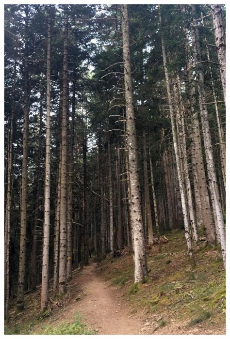 pisto forestal