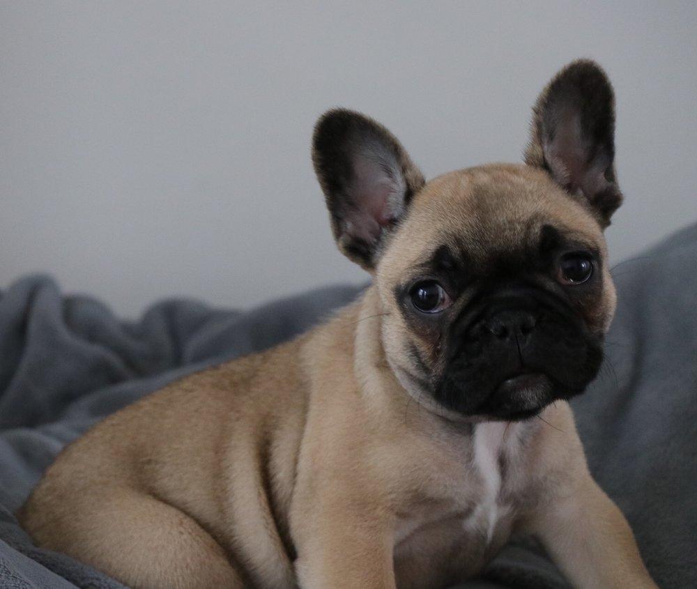 Winnie at 8 weeks x