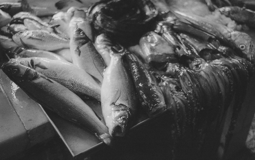Fish for sale at Vila do Conde's market, August 2016