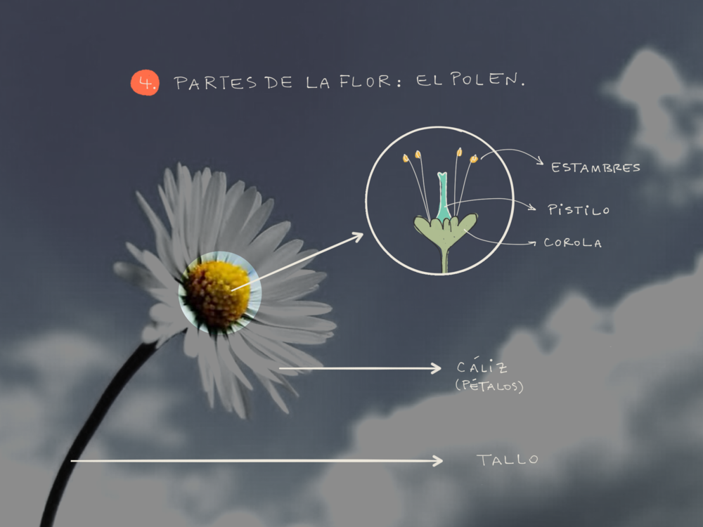monica-gimeno-flower-lesson-plan-fiftythree