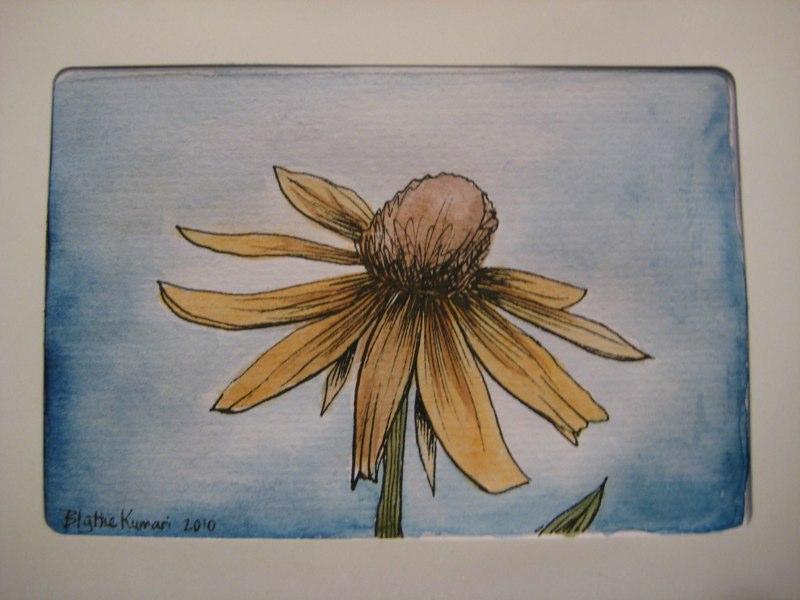 heliopsis-watercolor.jpg