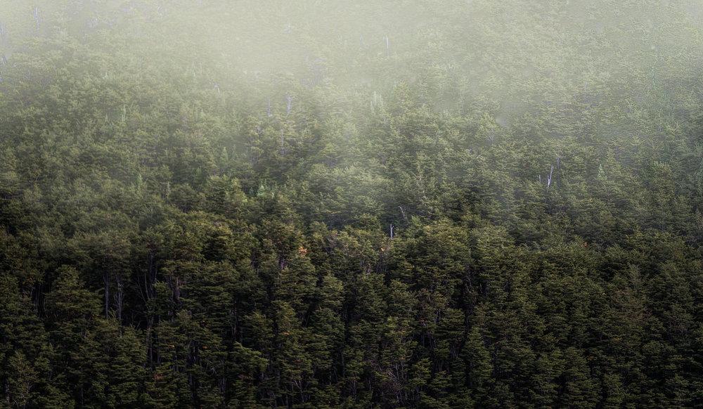 Neblina sobre Arboles.jpg