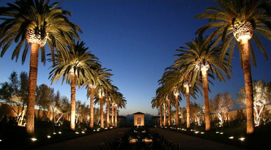 Outdoor Up Lighting For Trees Event lighting peaks proevent services orlandocommerciallandscapelighting1g workwithnaturefo