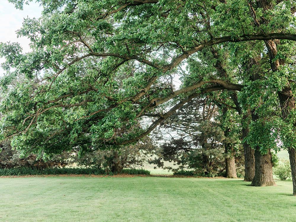 simple backyard wedding small wedding  waterloo cedar falls ia wedding photographer.jpg