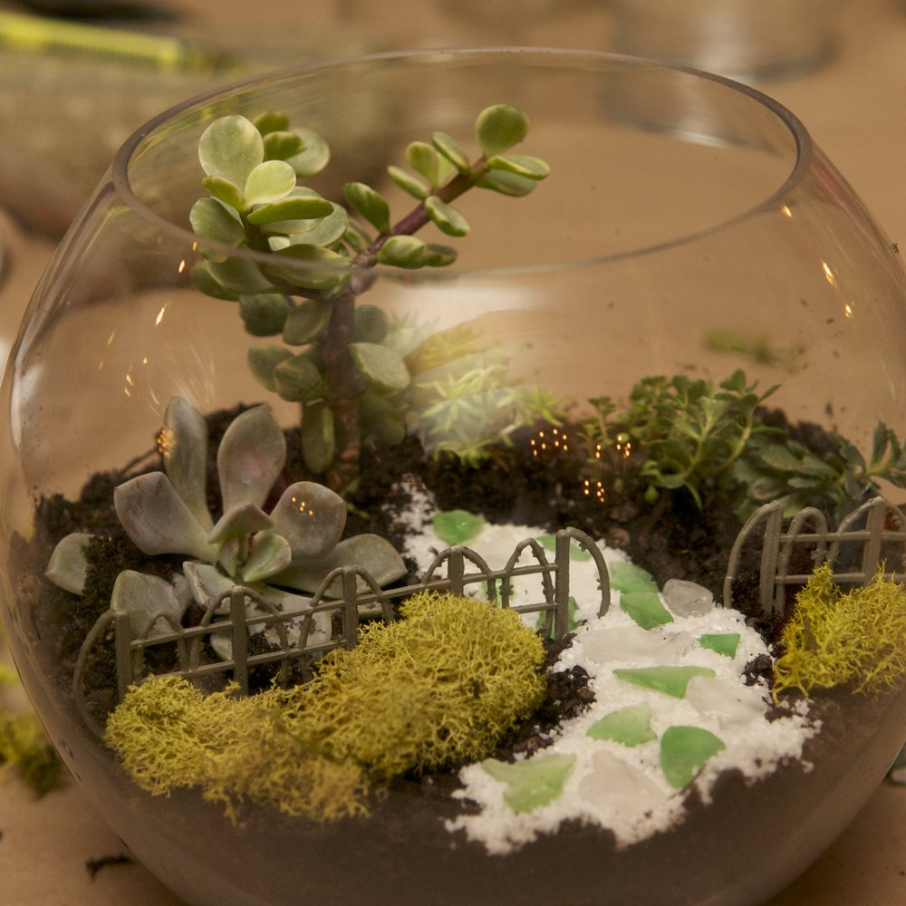 Getting Dirty On Valentine S Day Terrarium Class The Nest Reno