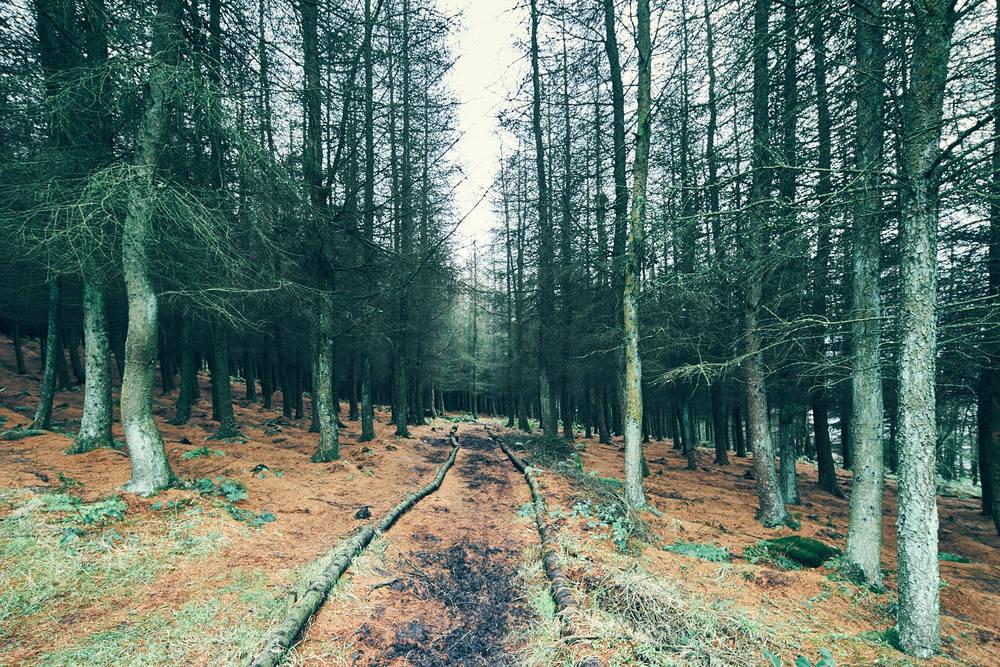 Crompton Trail, Oldham