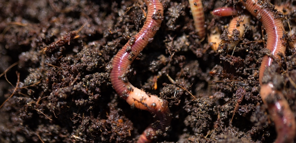 Worm composting can be done year-round, indoors in schools, offices, and homes.  Common Compost is piloting a community vermicompost co-op in Oakland to turn local food waste into soil for local agriculture.