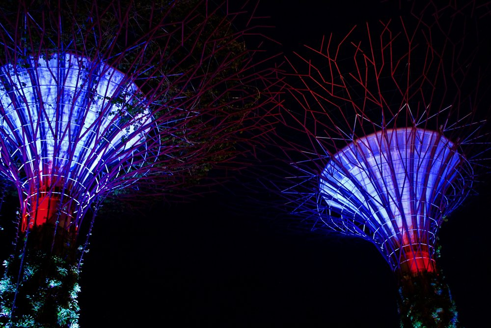 The Supertree Grove at Gardens By The Bay nature park, 18 Marina Gardens Dr, Singapore 018953
