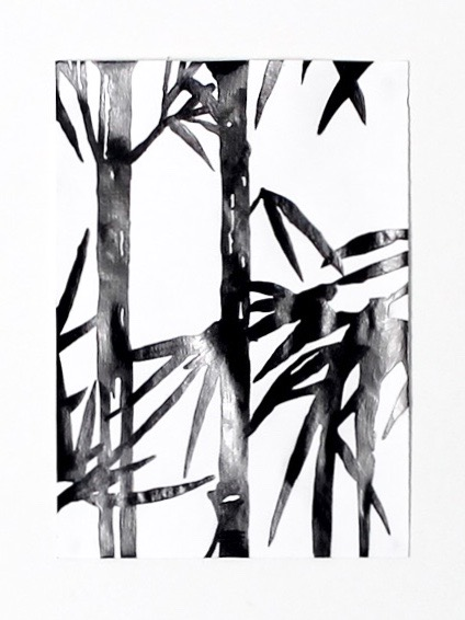 Bamboo, 2015   Graphite on paper, 30cm x 21cm