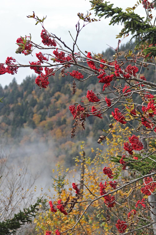 Mountain Berries.jpg