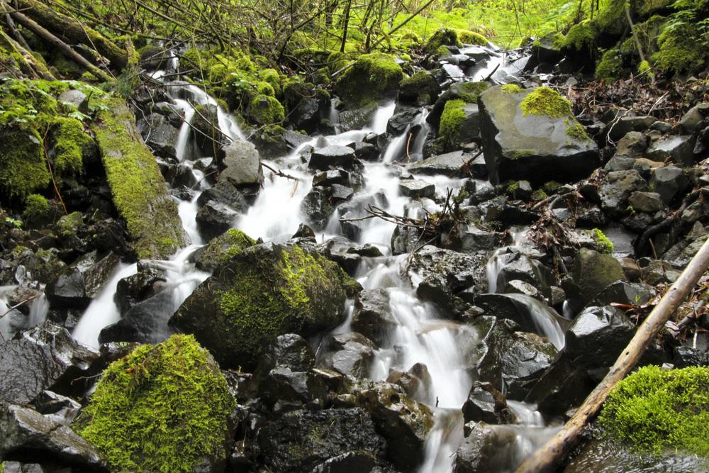 Oregon Stream 1.jpg
