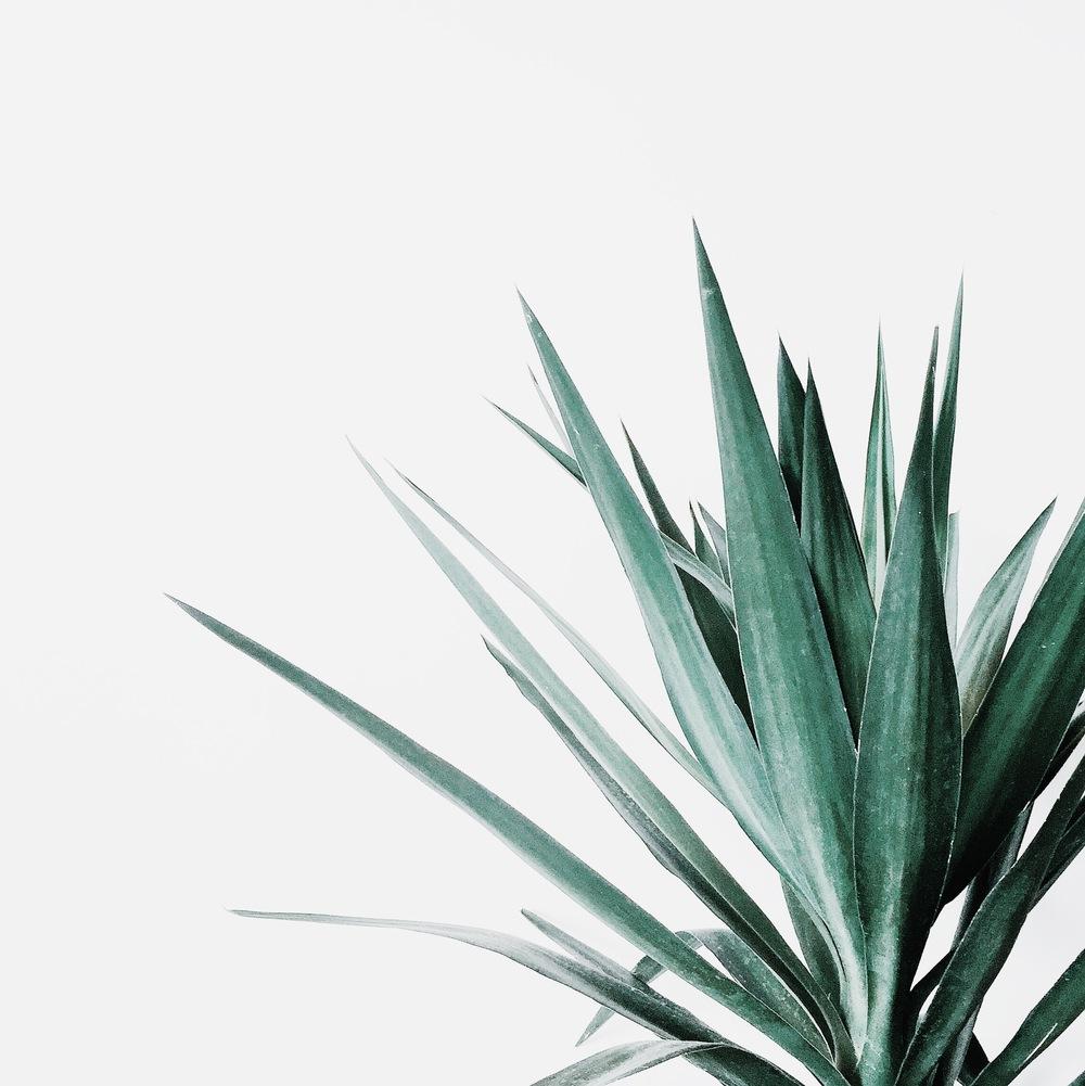 inspiration_grass.jpg