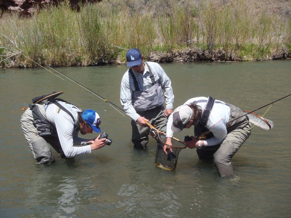 From left Josh Prestin, Bryan Huskey and Paul Moinester photograph a resting brown trout. Alison Kelsey photo.