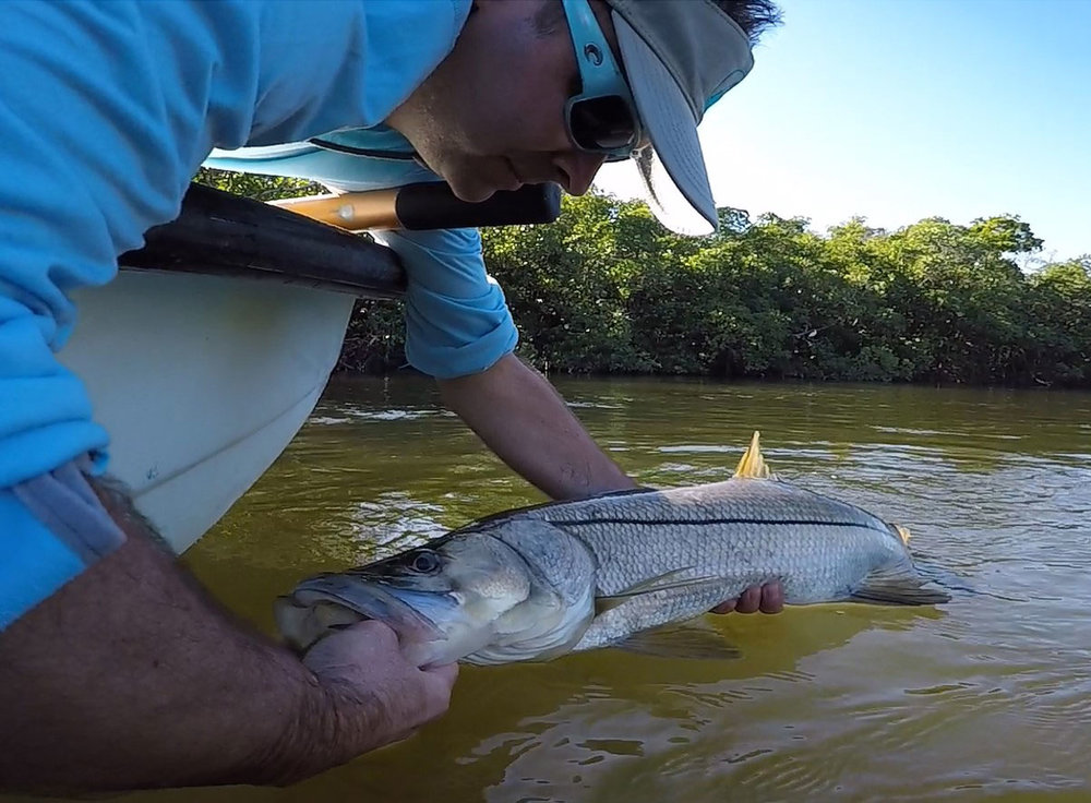 Steve Cooke releasing a snook.