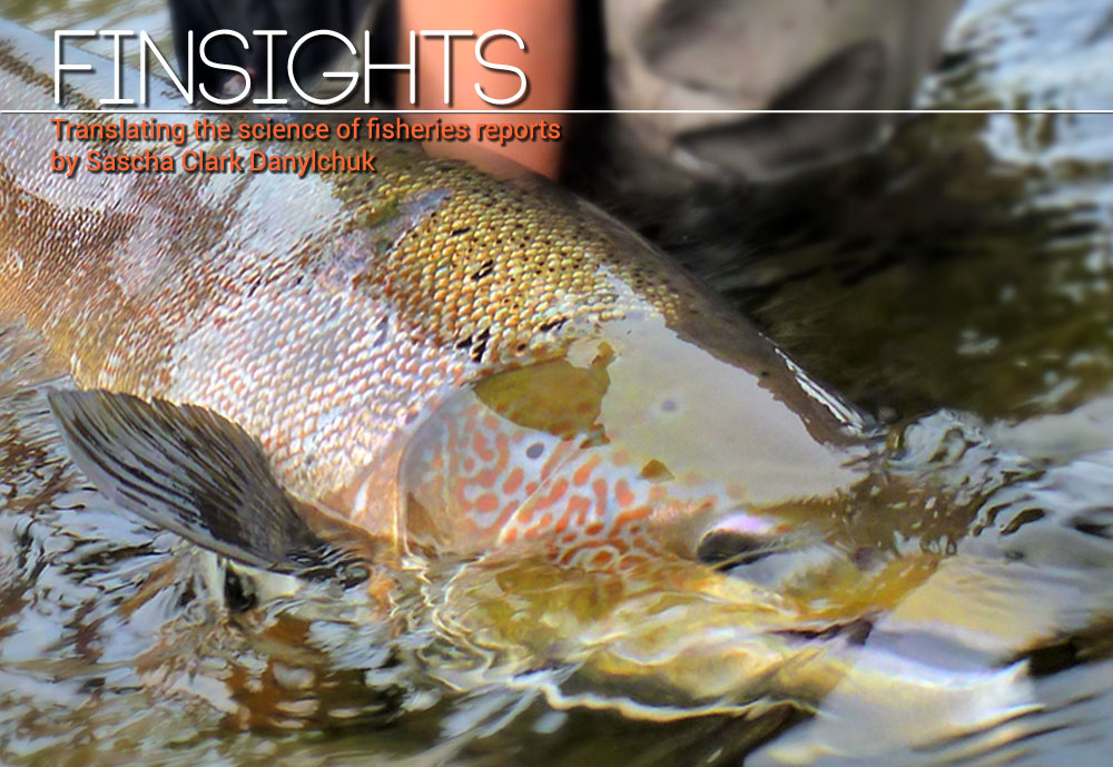 Finsights #7 Robert Lennox Photo
