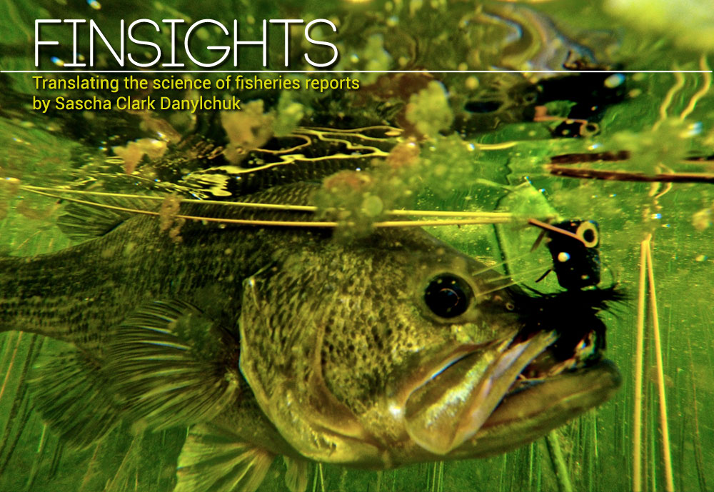 Finsights #9– How do you handle fish? Paul Moinester/Keepemwet Fishing photo.
