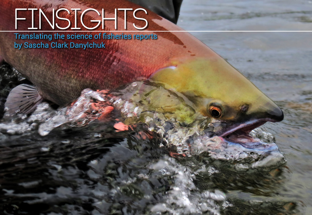 FINSIGHTS #13 Can You Revive Fish?