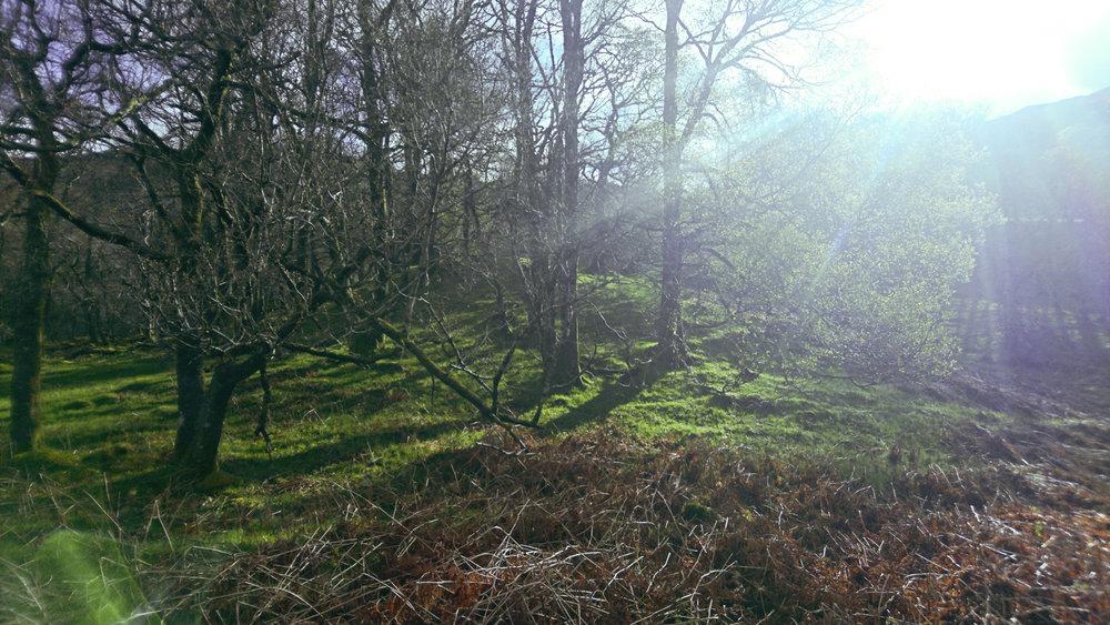 West Highland Way (15 of 43).jpg