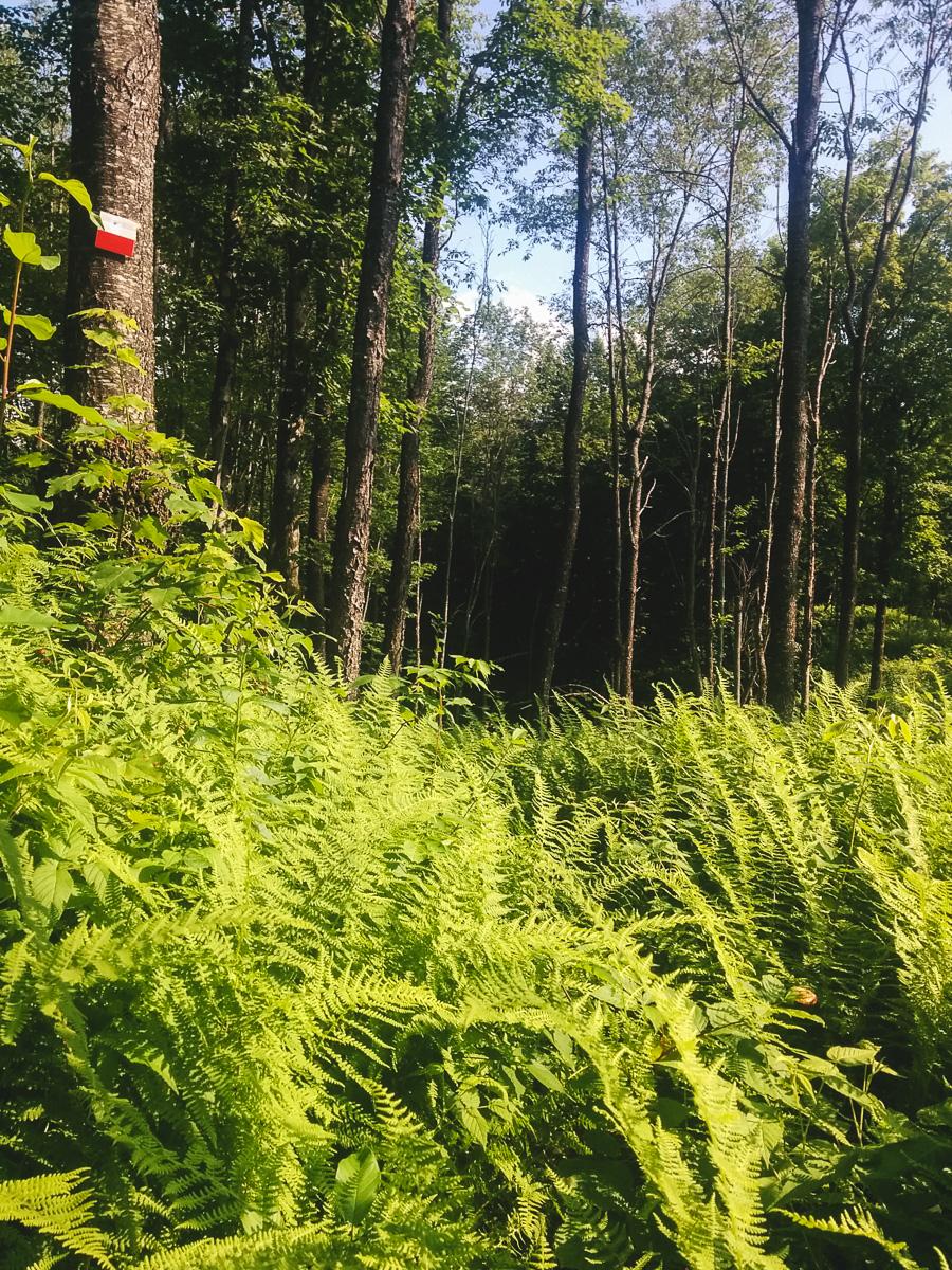 On perd le sentier dans les fougères et les herbes hautes dans la partie centrale