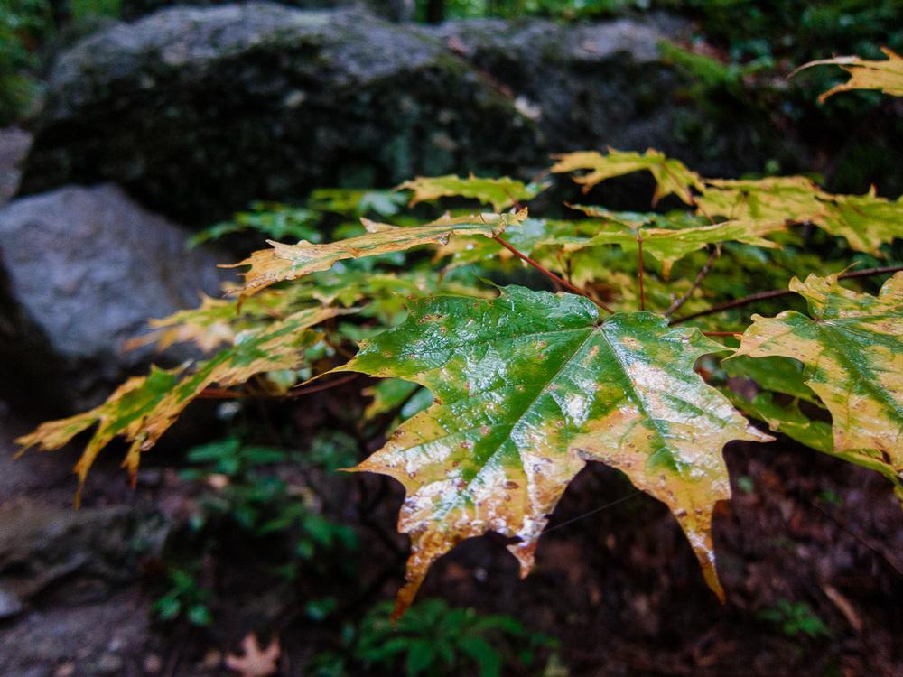 L'automne s'annonce déjà par ses couleurs