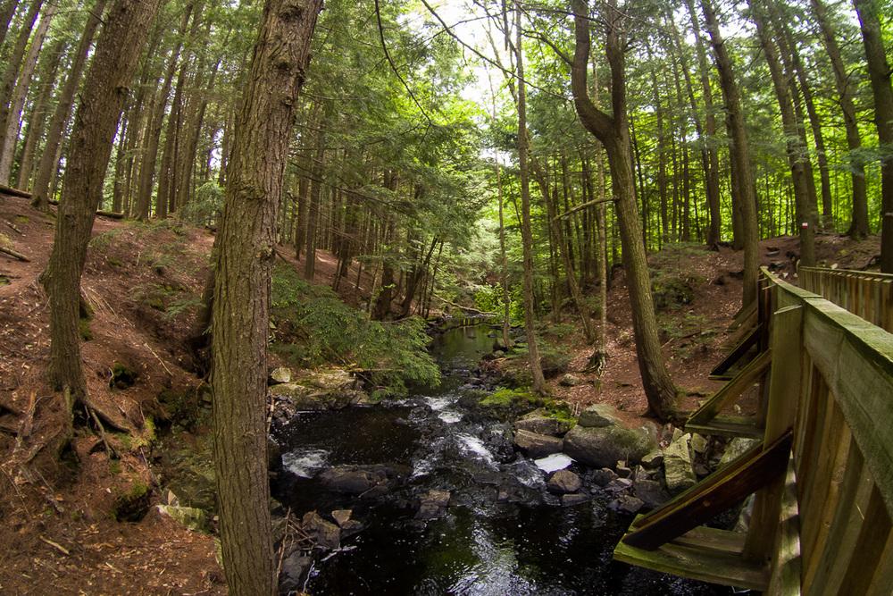 Le ruisseau Ely