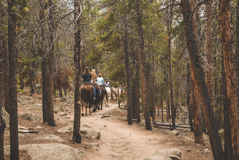 Beaucoup de chevaux à RMNP