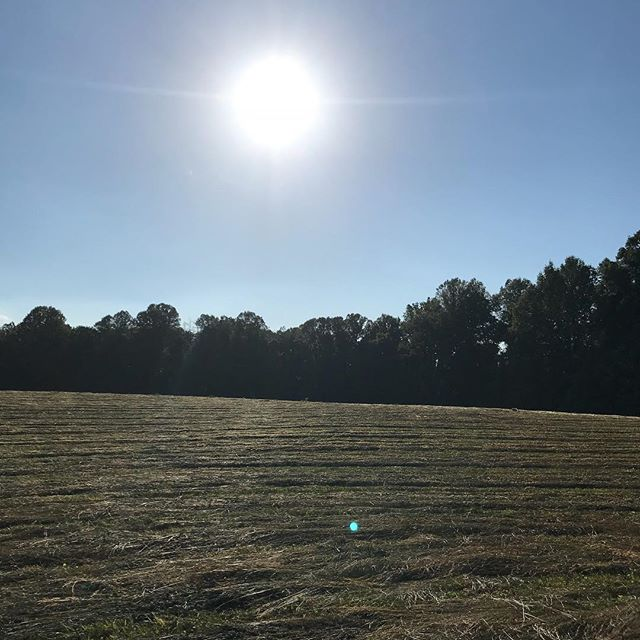 "Such a great feeling to have the hay mowed!  Good neighbors....otherwise known as ""hay angles"" made short work of both east and west fields today.  We have always cut our own hay, but these enterprising young Mennonite lads made us an offer we couldn't refuse.  #windsorwoolfarm #hayangles #makehaywhilethesunshines #westfield"