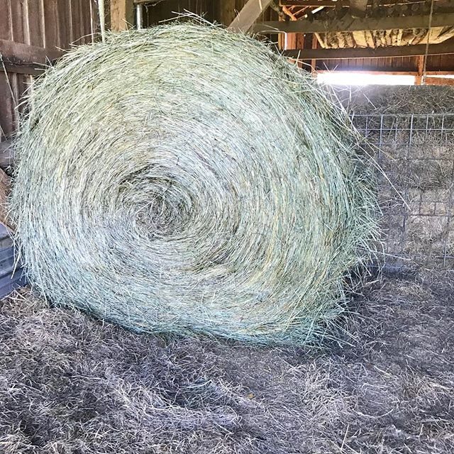 Hay! 🌾❤️ . #windsorwoolfarm #hay #firstofmany #bornonthefarm #grateful